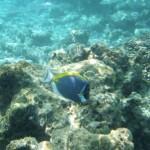 固有種もいっぱい!モルディブの海で出会った生き物たち
