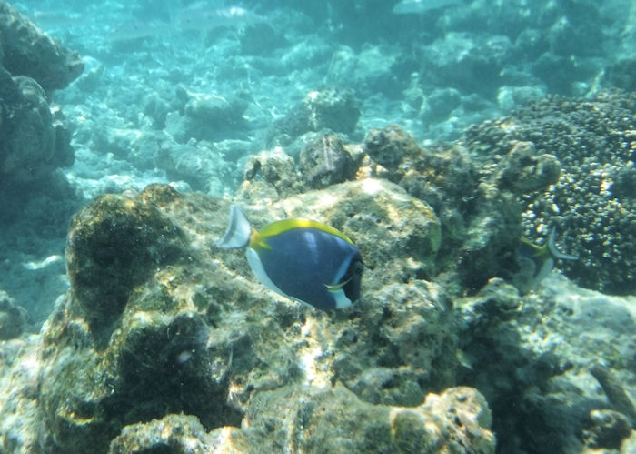 maldives-fish14
