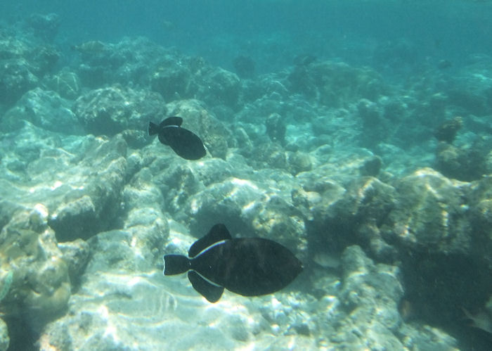 maldives-fish15