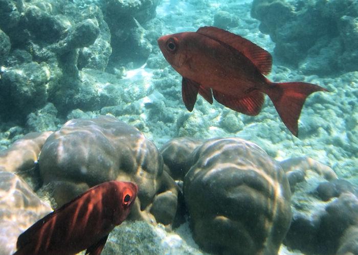 maldives-fish16