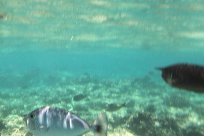 maldives-fish17