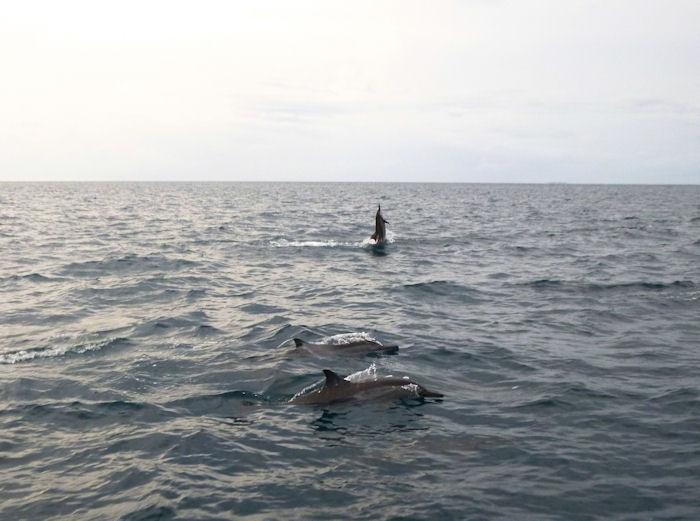 maldives-fish2