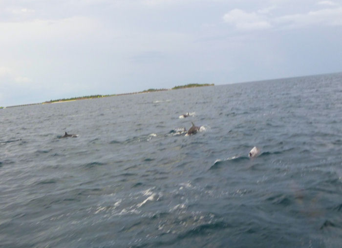 maldives-fish3