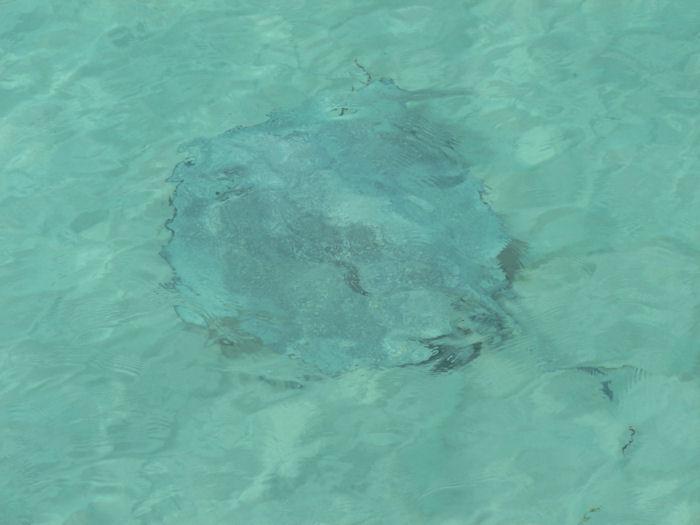 maldives-fish5