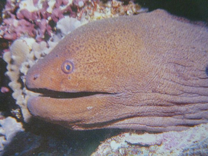 maldives-fish8
