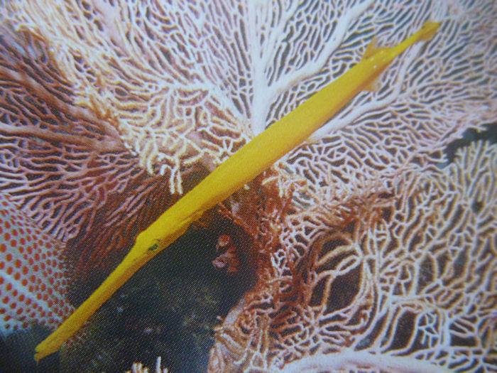 maldives-fish9
