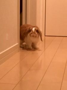rabbit-bath2