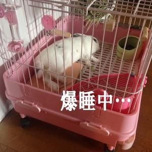 rabbit-cage2