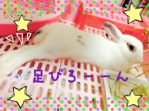rabbit-cage3