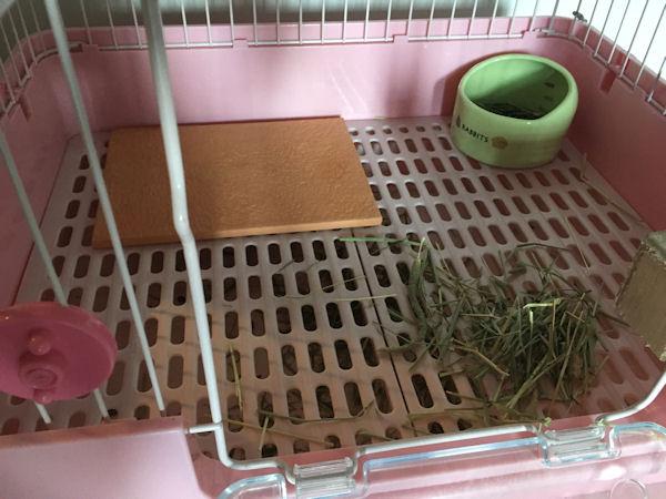 rabbit-mat2