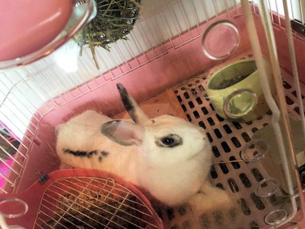 rabbit-mat3
