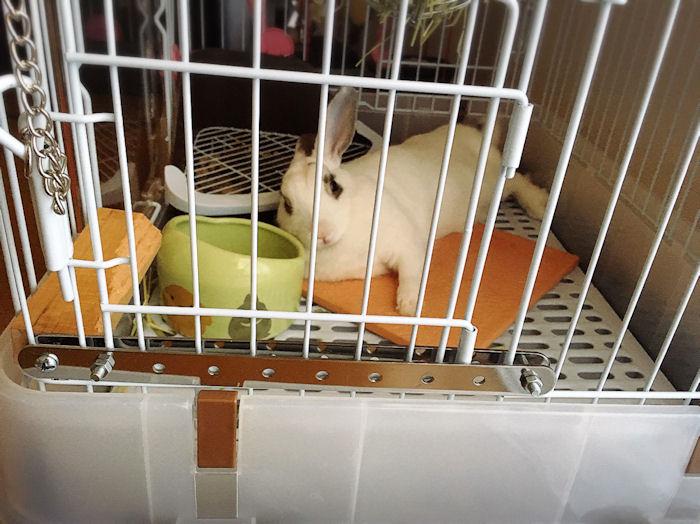 rabbit-mat4