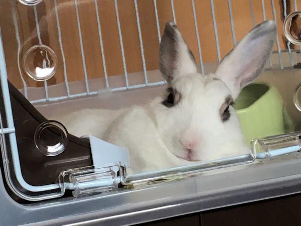 rabbit-mat6