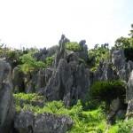 沖縄北部!トレッキング初心者におすすめ!カルスト地形「大石林山」