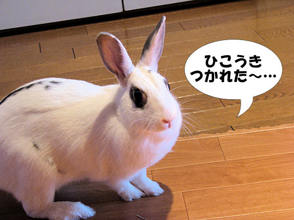 rabbit-plane6