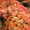 必見!京都永観堂の紅葉*ライトアップ・見所・御朱印帳情報