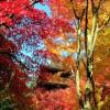 血染めの紅葉の見頃は11月!湖東三山「金剛輪寺」【滋賀】