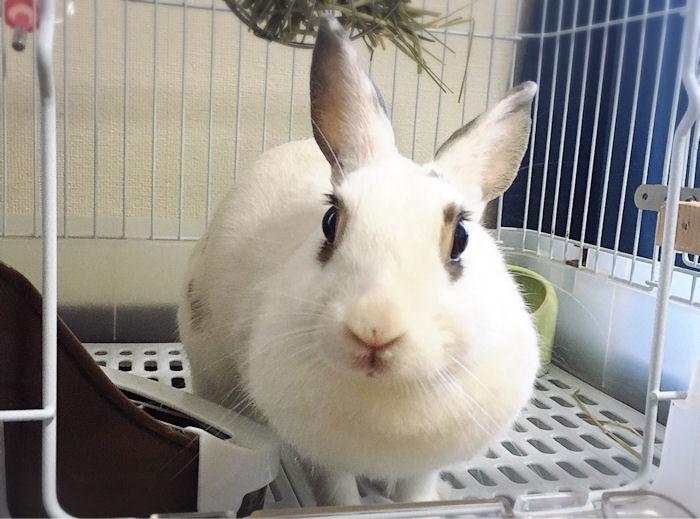 rabbit-cost4