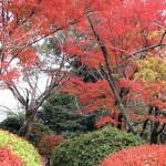 人混み嫌いの元京都民厳選!関西で混雑回避できる紅葉の穴場3選