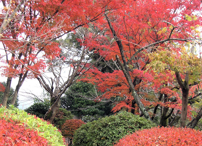 red-leaves11