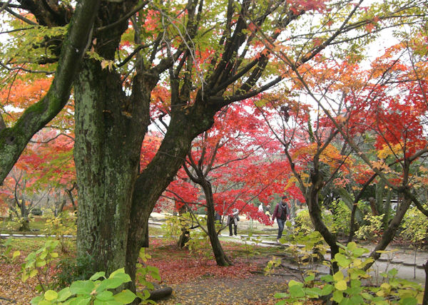 red-leaves2