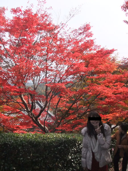 red-leaves6