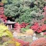 京都山科にある紅葉の穴場!3つの寺を1日で巡るおすすめコース
