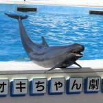 美ら海水族館のイルカショーが見たい!再入場で上手くまわる方法