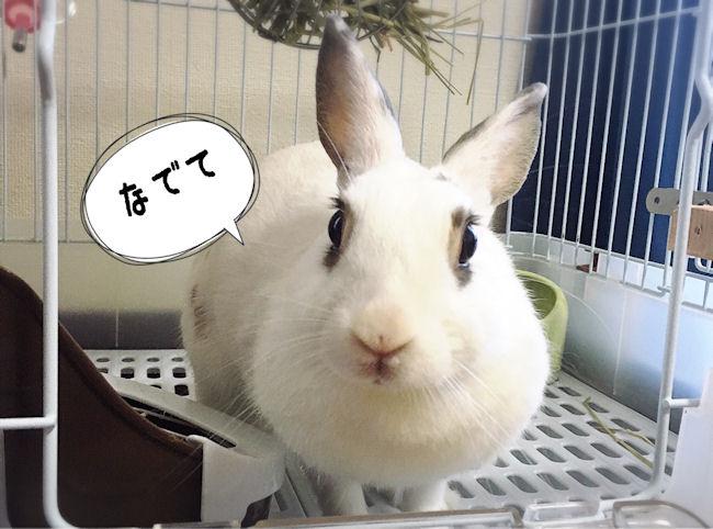 rabbit-petting9