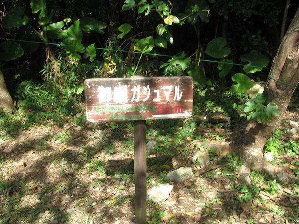 gajumaru13