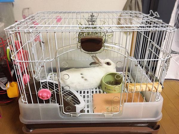 rabbit-summary2