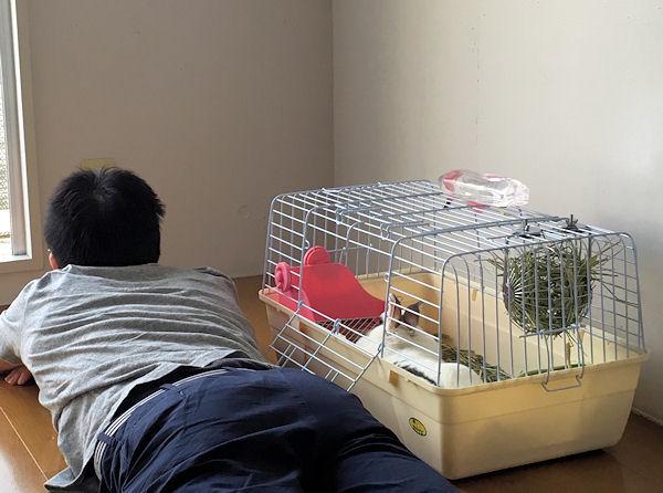 mobing-rabbit3