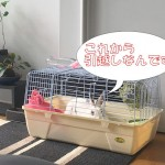 沖縄に引越し!うさぎを連れて移動した方法を詳しく解説するよ