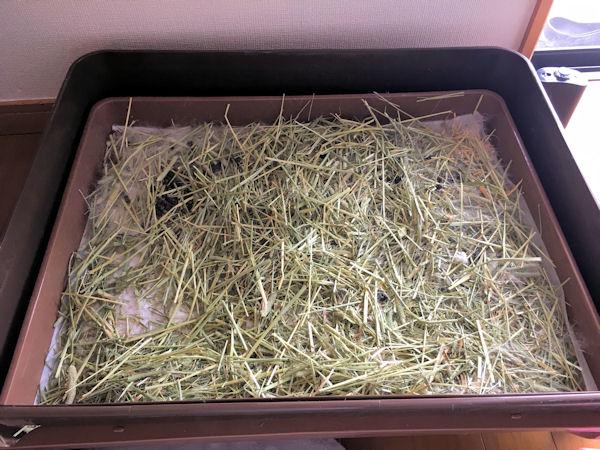 rabbit-cage-clean15