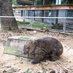 大阪池田市の五月山動物園は子連れ向け!駐車場・授乳室情報など