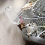 うさぎが水を飲みすぎる!病気を疑って動物病院へ行ったときの話