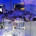 沼津深海水族館が面白い!見どころや混雑状況・子連れ情報など