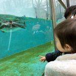 川崎の夢見ヶ崎動物公園は無料!レッサーパンダやペンギンもいるよ