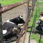子連れでマザー牧場へ!赤ちゃんも楽しめる体験やクーポン情報