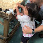 野毛山動物園にベビーカーは必要?ふれあい広場整理券やランチ情報も