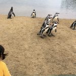長崎ペンギン水族館!ふれあいや砂浜お散歩・ごはんタイムが面白い
