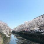 蒔田公園でお花見!大岡川桜並木を散歩後のお弁当&休憩に最適!